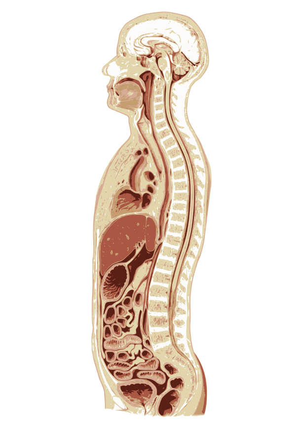 Osteopathie – Praxis Dr. Cordula Wesselmann